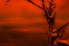 Crimson-Vista
